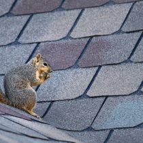 Extend the Lifespan of your roof - Cox Roofing