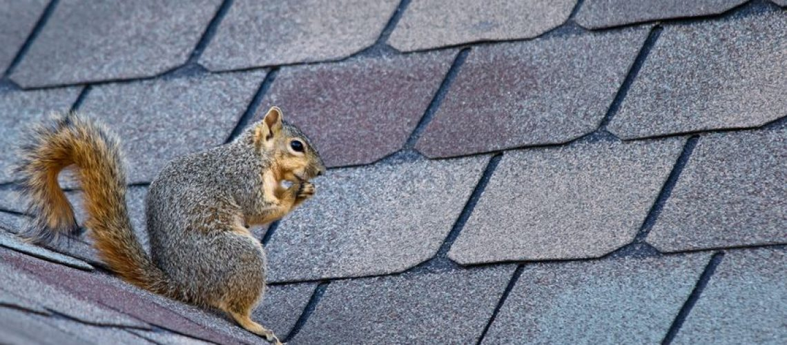 Winter Pests - Cox Roofing