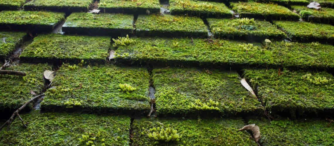roofing companies in Clarksburg -- Cox Roofing