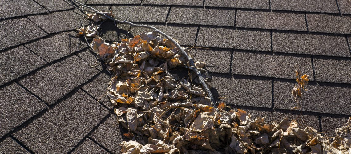 Shingle Maintenance-Cox Roofing